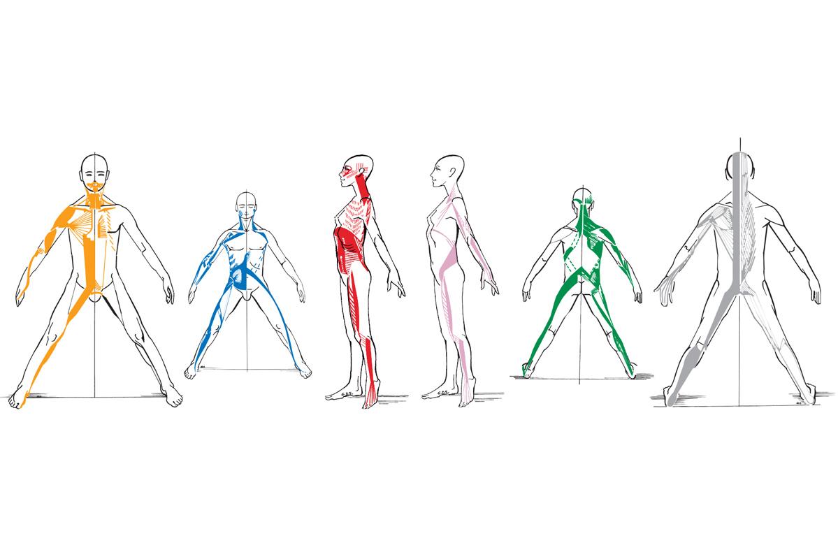 Les chaînes musculaires GDS